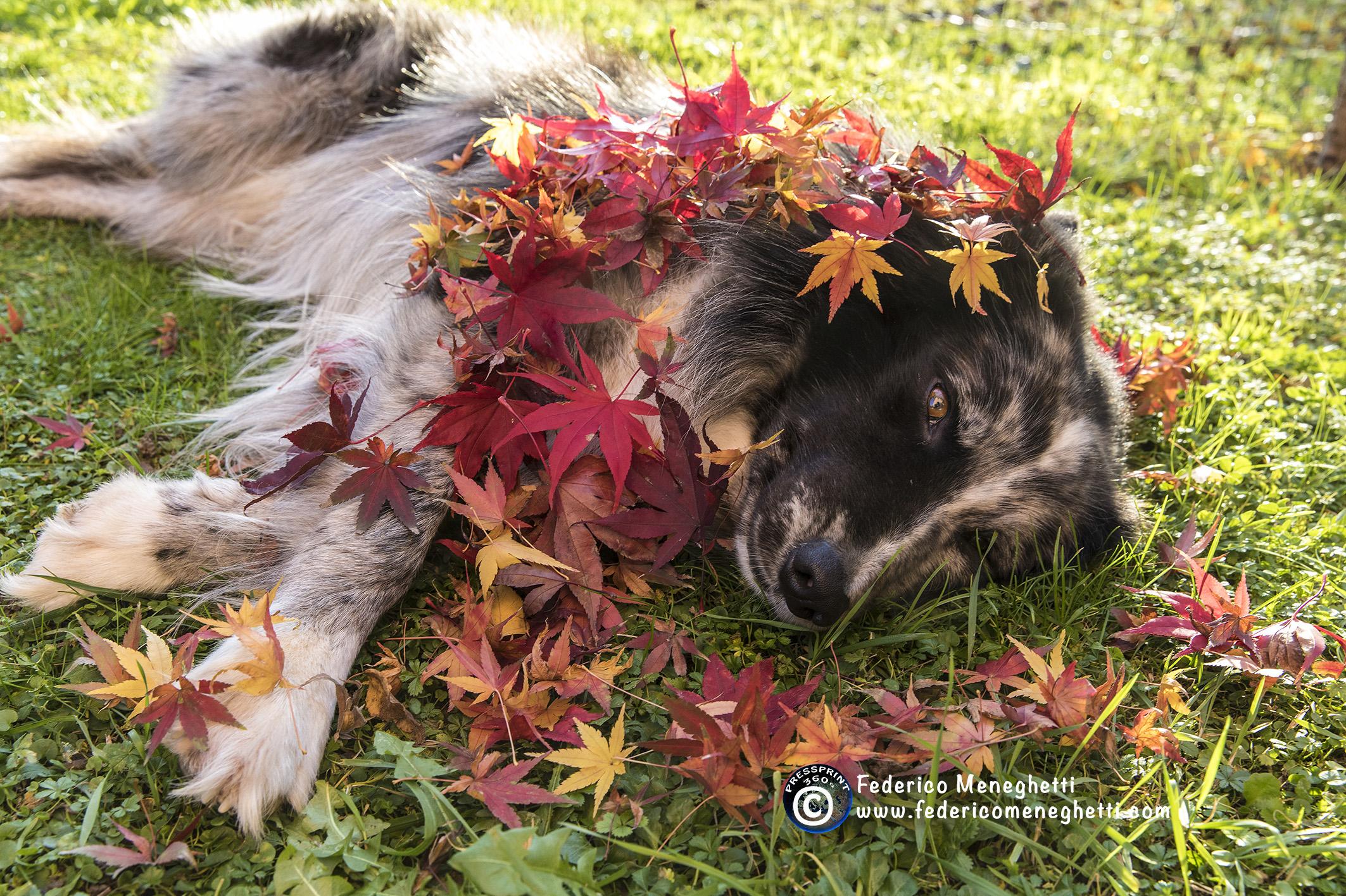 dog photography autunno