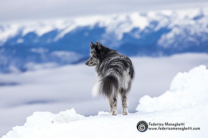 dog photography, panorama montagna