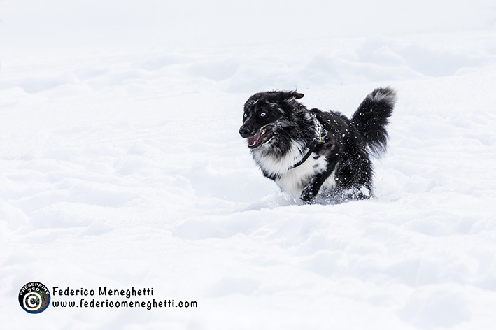 cane di corsa sulla neve