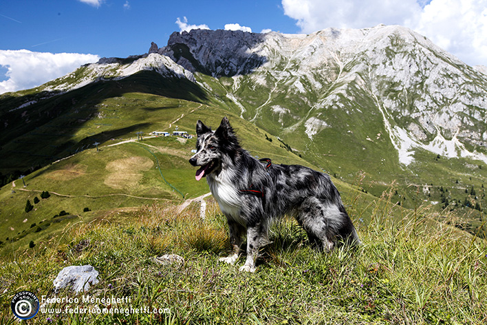 fotografo per cani, panorama montagna