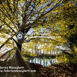 Foto bosco in autunno 70x100