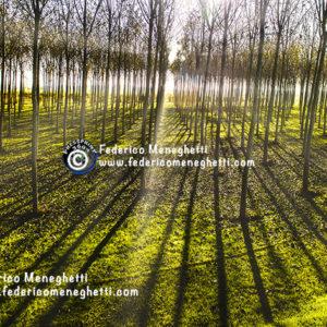 Foto Autunno nel bosco 50x70
