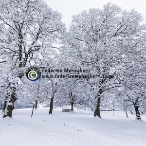 Foto Alberi e neve